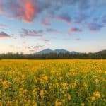 Arizona Snowbowl, Flagstaff Photographer, Flagstaff Photography, Arizona, Flagstaff, AZ Photographer Flagstaff, Photography Flagstaff, Flagstaff Landscape