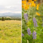 Amanda and Quincey: Flagstaff Elopement Photography