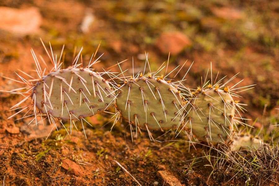 Shelby and Ana: Red Rocks Arizona Portraits detail
