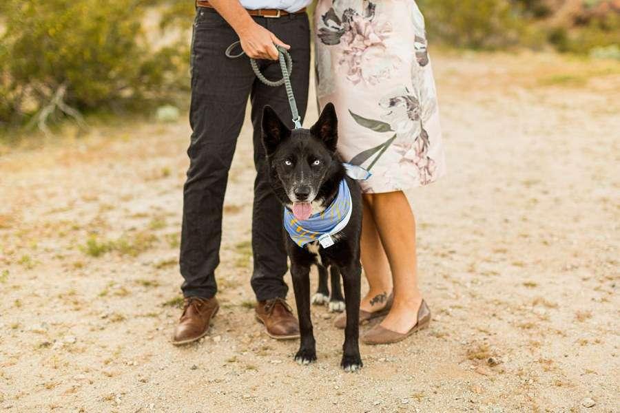 Liz and Jeremy: Tempe Arizona Engagement Photographers dog