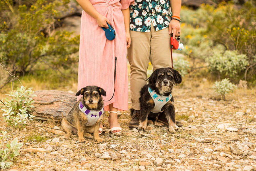 The Martin Family: Phoenix AZ Portrait Photography dogs Tips for Bringing Dogs Along to Sessions