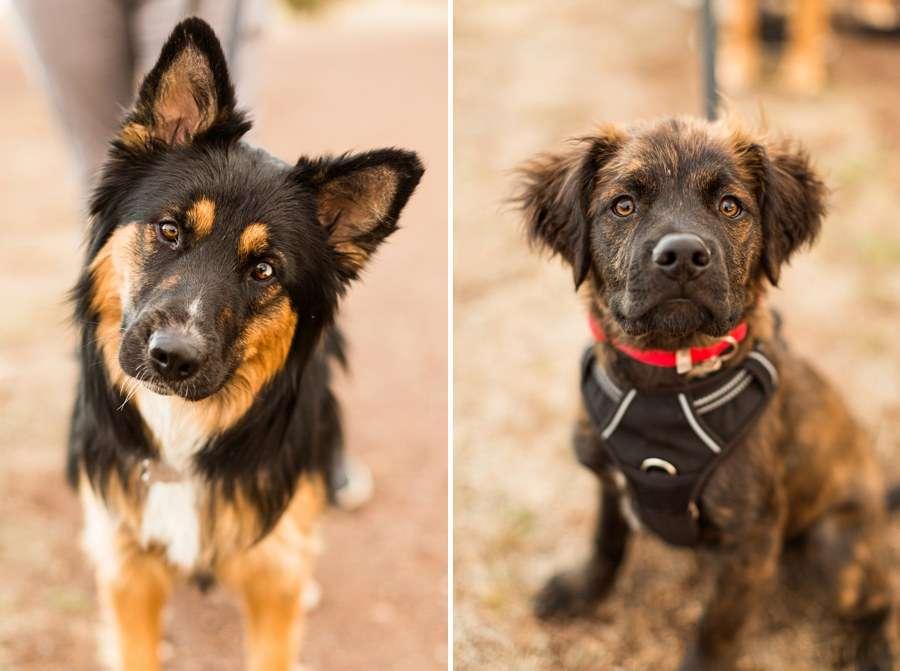 Savannah: Northern AZ Senior Photography puppies