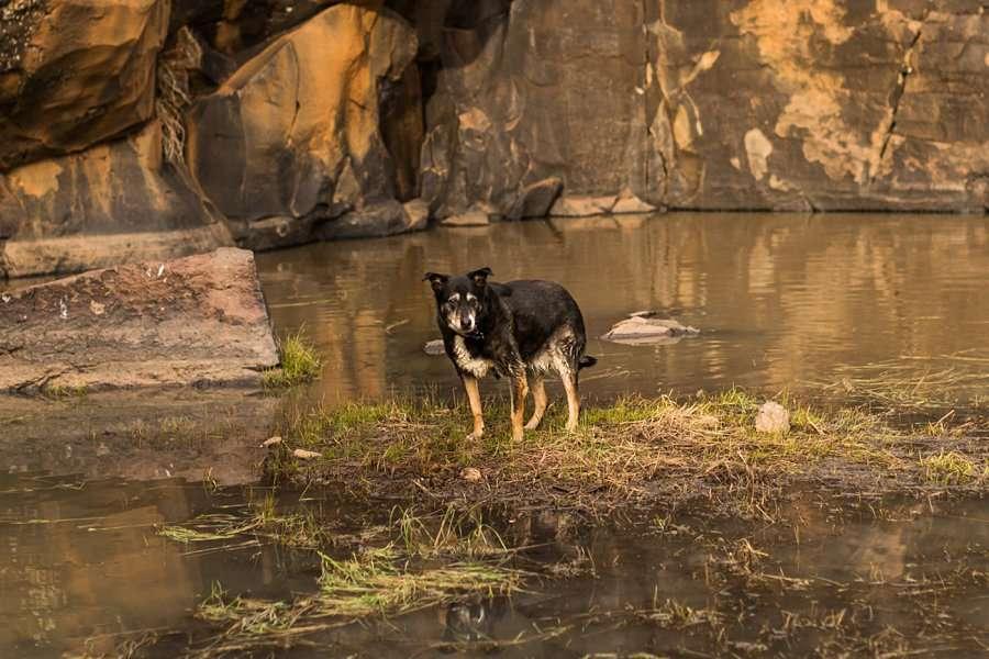 Taylar and Jacob: Flagstaff AZ Portrait Photographer doggy