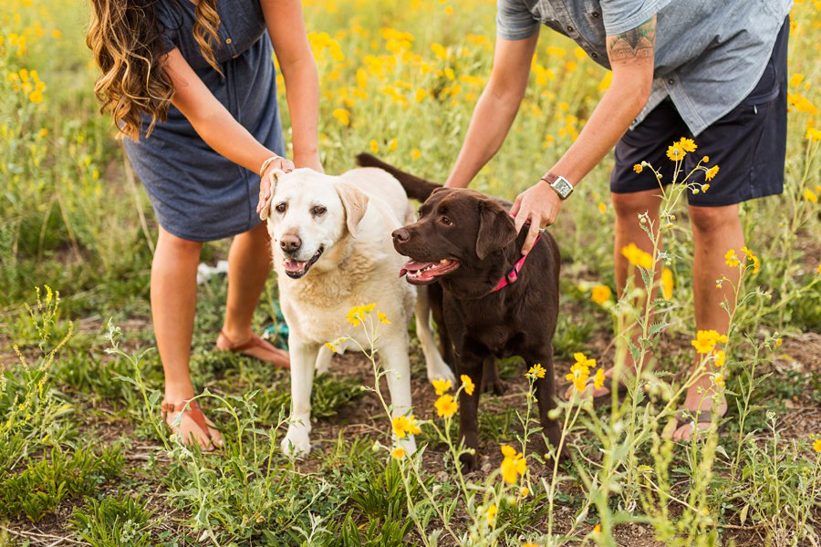 Northern Arizona Mini Session: Vesely Family's Mini Session adorable dogs