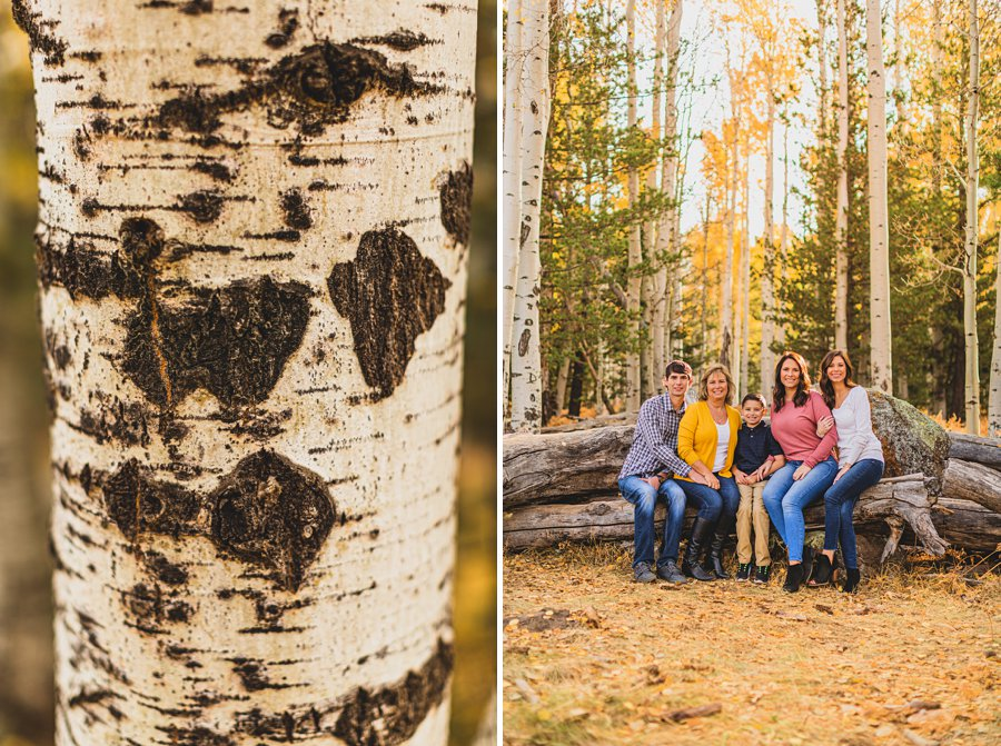 Barrett Family: Aspens Flagstaff Portrait Photographers aspens and cuddles