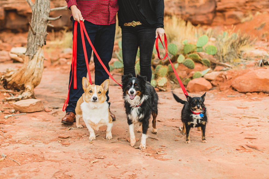 Samantha and Kevin: Cathedral Rock Sedona Engagement little dogs