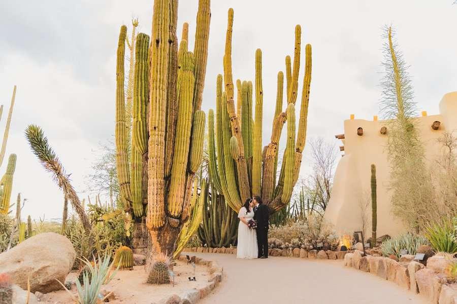 Shawna and Jason: Phoenix Arizona Wedding Photographers cacti
